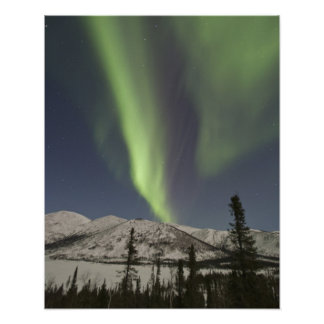 Curtains of aurora borealis dance across the sky posters