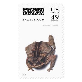 Cururu toad stamp
