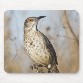 Curve-billed thrasher perched mouse pad