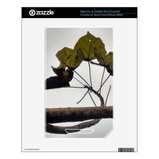 Curved leaves skin for the NOOK color