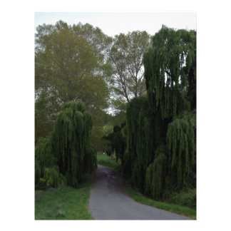 Curved road down a country lane lined green trees flyers