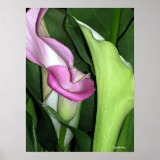 Curvy Calla Lilies Print