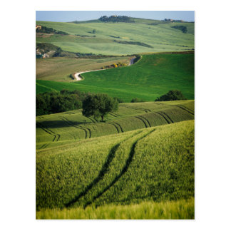 Curvy lines in green Tuscany postcard