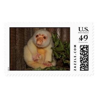 Cuscus in Papua New Guinea Postage
