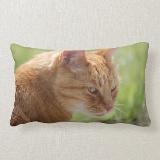 CUSHION red domestic cat - photo: Jean Louis