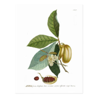 Custard apple postcard