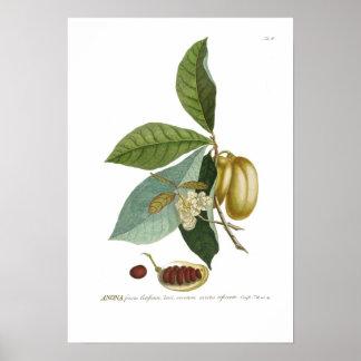 Custard apple poster