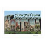 Custer Nat'l Forest, Montana Postcard