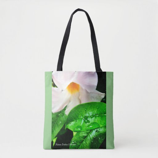 Earth Friendly Christmas Gifts