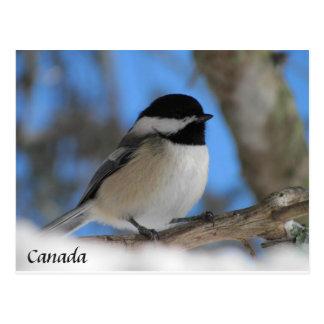 Custom Canada  bird Chickadee  Post card