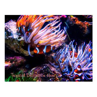 Custom Clownfish Destination Postcard