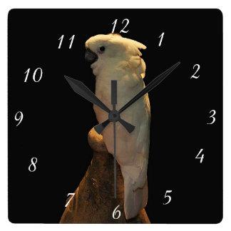 Custom cockatoo bird posing in the night square wall clock