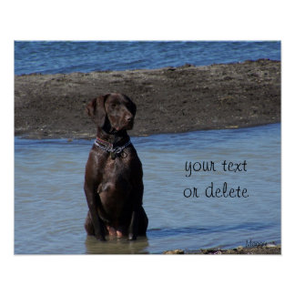 Custom Dog in the Lake Water- What s He Thinking Posters