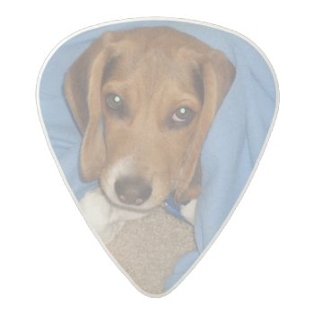 Custom Dog Photo Acetal Guitar Pick by ArianeC at Zazzle
