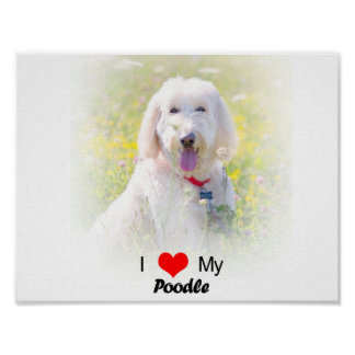 Custom I Love My Poodle Poster
