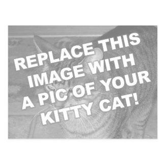 Custom Kitty Cat Postcard