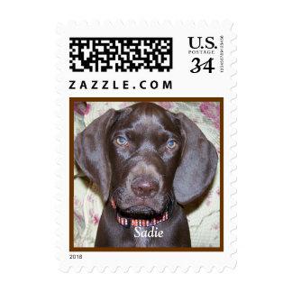 Custom Pet Adoption U.S. Postcard Postage Stamp