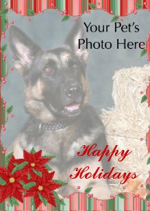 Pet christmas cards zazzle custom pet christmas cards m4hsunfo