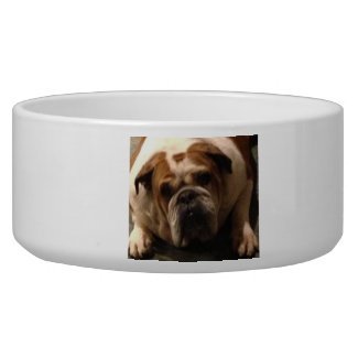 personalized dog WATER BOWLS