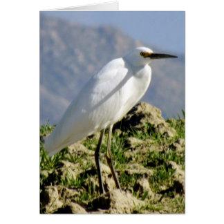 Custom Photo Regal Snowy Egret Card