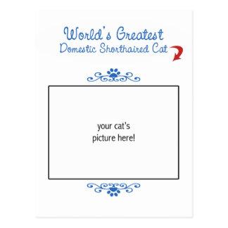Custom Photo! Worlds Greatest Domestic Shorthair Post Card
