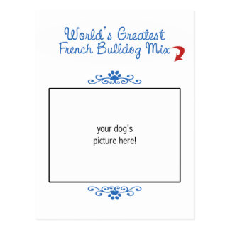 Custom Photo! Worlds Greatest French Bulldog Mix Postcards