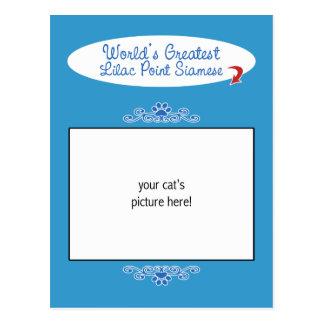 Custom Photo! Worlds Greatest Lilac Point Siamese Postcard