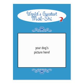 Custom Photo! Worlds Greatest Mal-Shi Postcard
