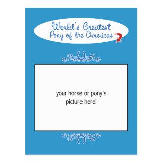 Custom Photo! Worlds Greatest Pony of the Americas Postcard