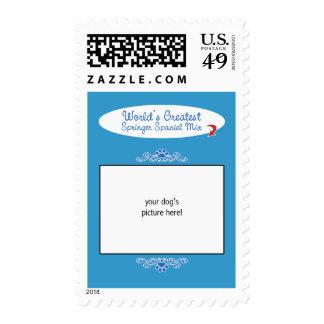 Custom Photo! Worlds Greatest Springer Spaniel Mix Stamps