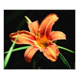 Custom Photography Print Orange Lilly