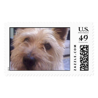 Custom Postage Stamps for the Dog Lover