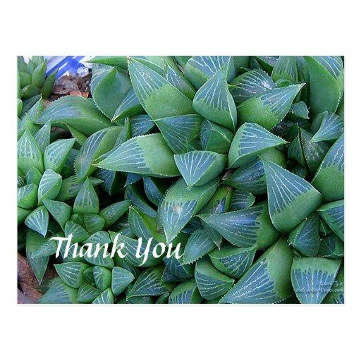 Custom Thank You Haworthia Plants Postcard