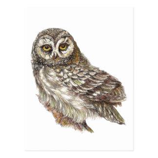 Custom Watercolor Owl, Bird, Nature, Wildlife Postcard