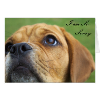Customisable Cute Puppy I am Sorry greeting Card