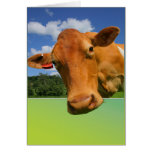 Customisable greeting card - cow face