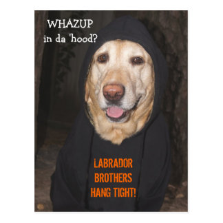 Customizable 90 lb. Lab in Hoodie Post Cards