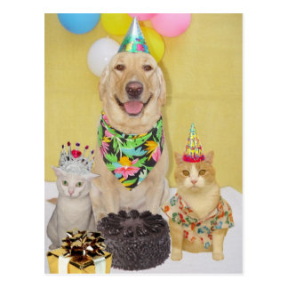 Customizable Birthday Greeting or Invitation Postcard