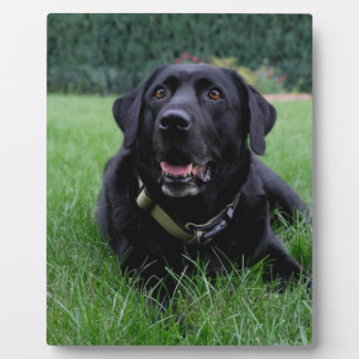 Customizable Black Labrador Retriever Plaque