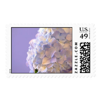 Customizable Blue Hydrangea Postage