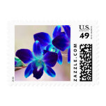 Customizable Blue & Purple Orchid Postage Stamps