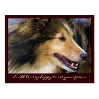 Customizable Collie Postcards
