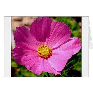 Customizable Cosmo Flower Card