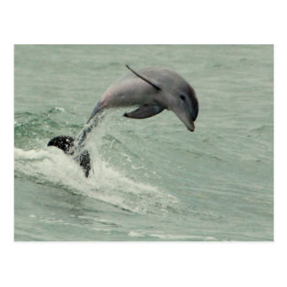 Customizable Dolphin Postcard
