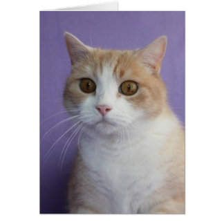 Customizable Funny Cat/Kitty Encouragement Greeting Card