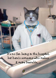 Customizable Funny Cats Kitties Get Well Card