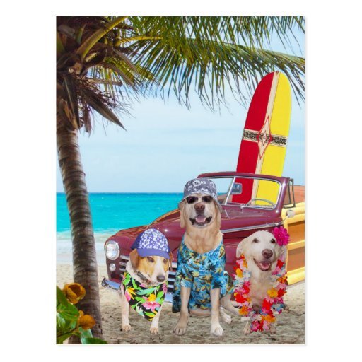 Customizable Funny Dogs/Labs on the Beach Postcards