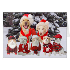 Customizable Funny Pets Christmas Card at Zazzle