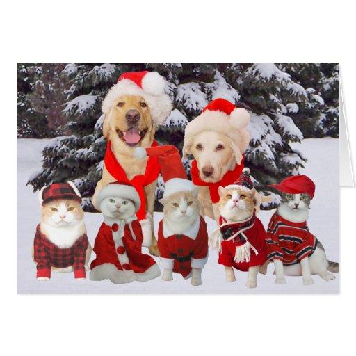 Customizable Funny Pets Christmas Card