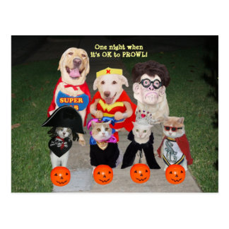 Customizable Funny Pets Postcard/Invitation